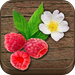 Wild Berries & Herbs - NATURE MOBILE